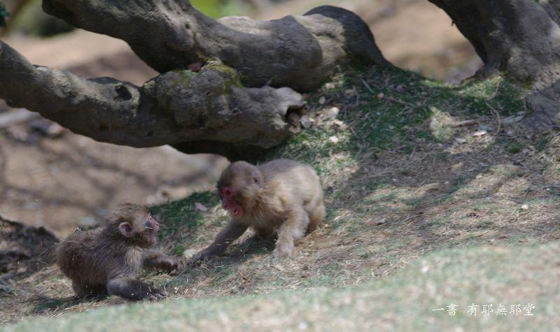 子猿の喧嘩_a0157263_21224624.jpg