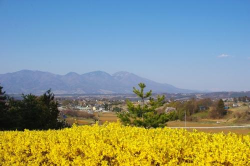権現山運動公園の桜が満開_c0110869_264785.jpg