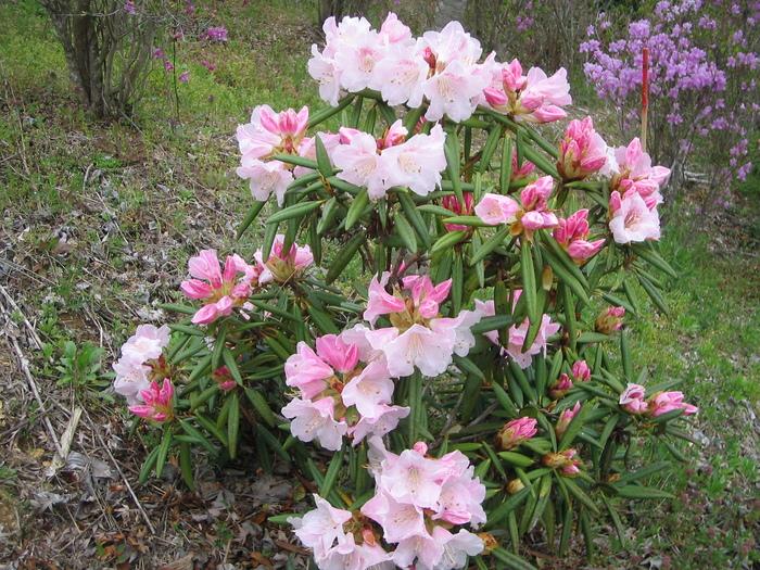 咲いています_f0085369_10155741.jpg