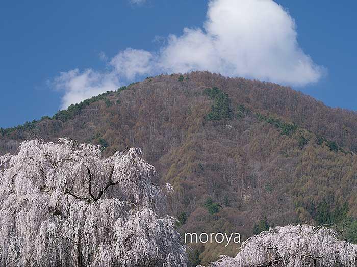 田多井の枝垂桜_c0085877_733672.jpg
