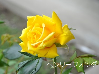 a0143388_914861.jpg