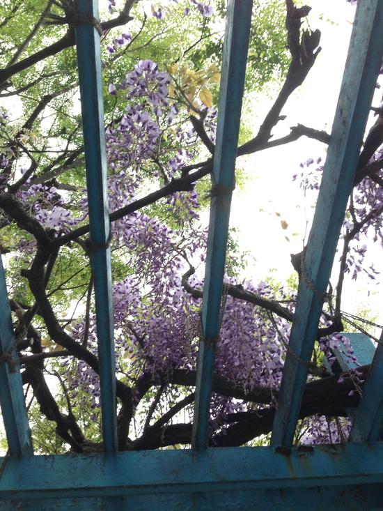 花盛り / the bloom of this spring_f0236691_6374679.jpg