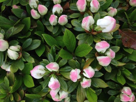 花盛り / the bloom of this spring_f0236691_6375241.jpg
