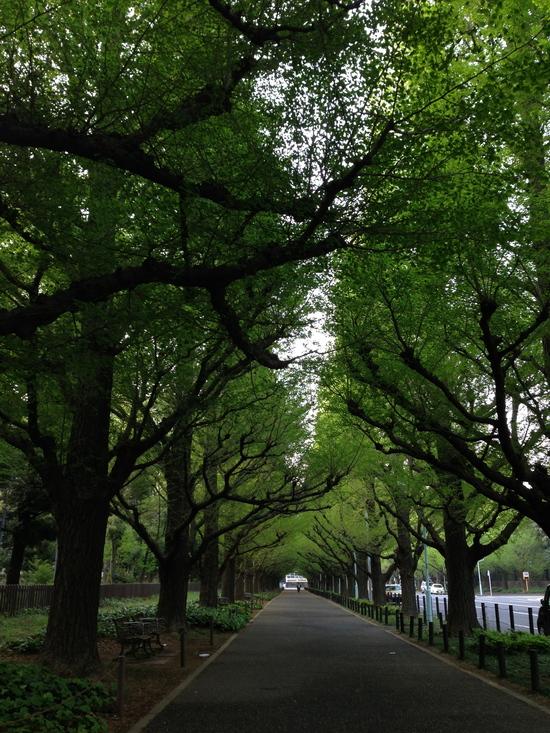 花盛り / the bloom of this spring_f0236691_6375366.jpg