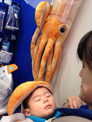 念願の海遊館!_a0188798_13331514.jpg