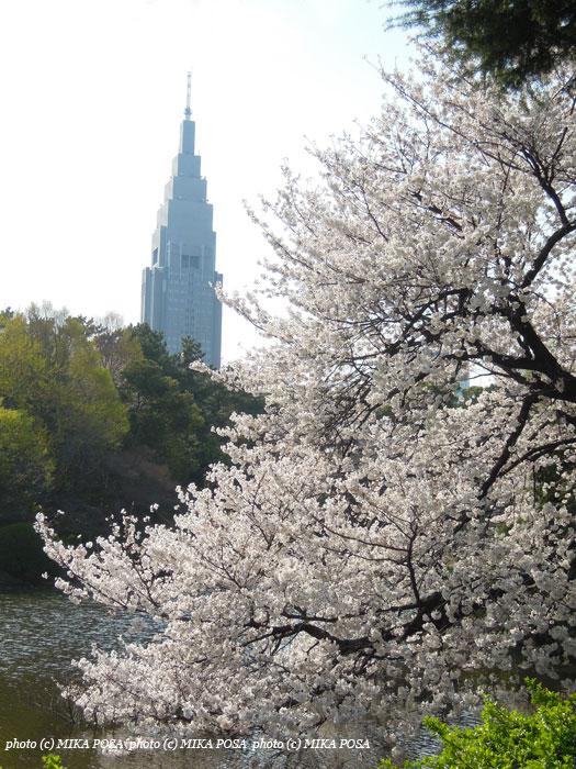 今年の桜_b0164803_14173478.jpg