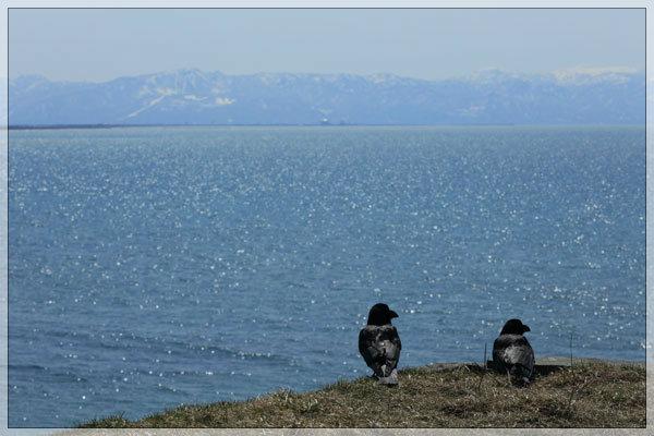 海を見ていた午後、のカラス_e0235910_16023775.jpg
