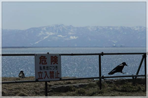 海を見ていた午後、のカラス_e0235910_16074473.jpg