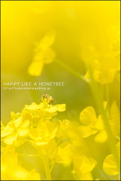 Happy Like a Honeybee_f0100215_22362892.jpg