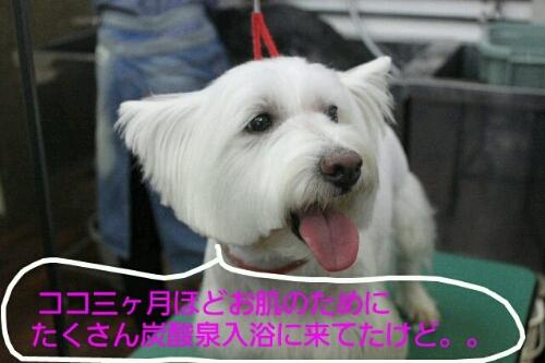b0130018_236665.jpg