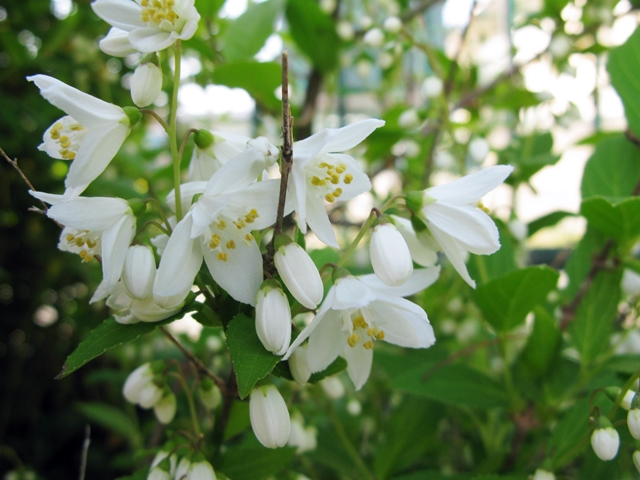 春爛漫 Ⅱ_f0129726_23285075.jpg