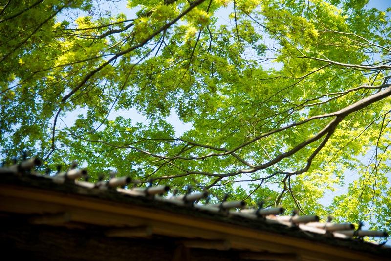 屋根を覆う若葉_b0230131_923574.jpg