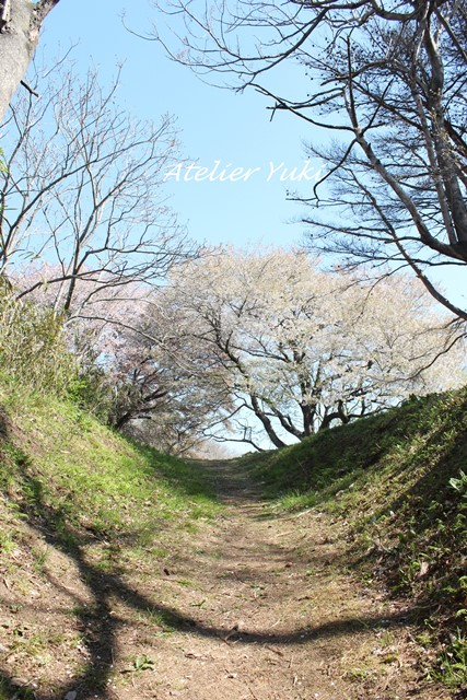 桜へ続く道^^_f0240834_227495.jpg