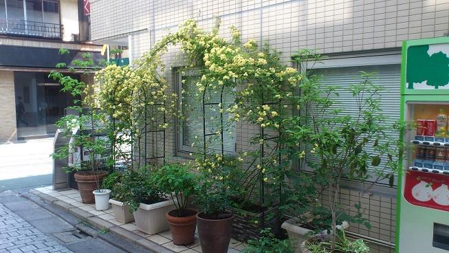 花盛り_d0155439_2345273.jpg