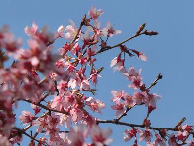 桜前線只今標高1000m♪_f0019247_10515390.jpg