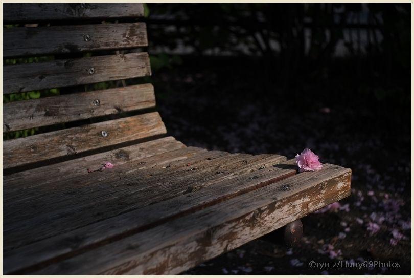 八重桜ひとつ  X-E1_e0063851_18292972.jpg