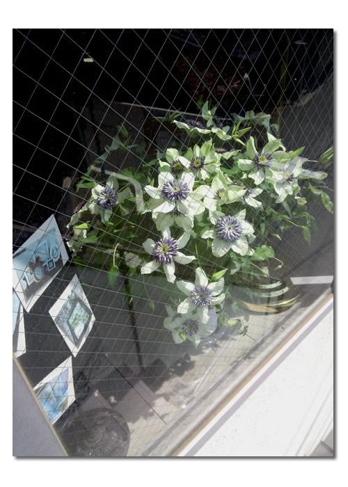 春を満喫してください!花、、、いっぱい!_e0291354_10475424.jpg