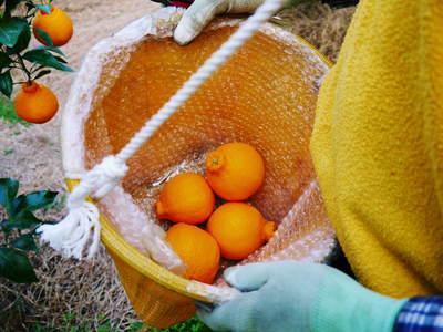 「FLCパートナーズストア」のイチオシ「母の日ギフト」は、至高のフルーツ2本立て!!_a0254656_1844785.jpg