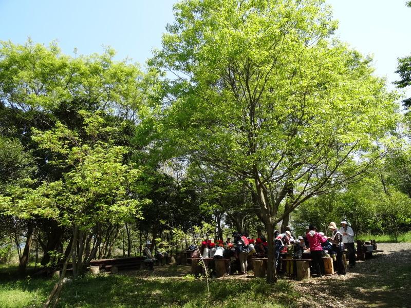 多奈川小学校1・2年生遠足サポート   in  うみべの森_c0108460_16511689.jpg