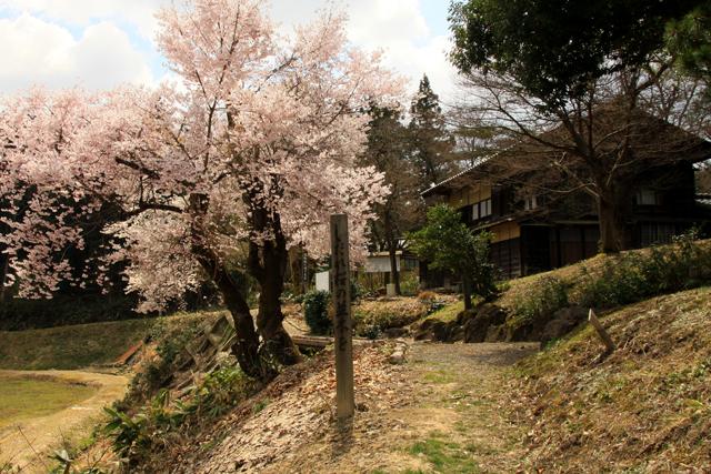 漢学の里の桜_a0267861_20261787.jpg