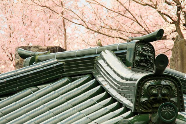 漢学の里の桜_a0267861_20312041.jpg