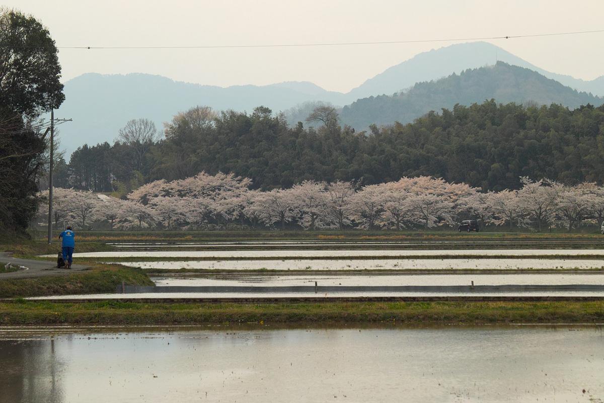 桜 2014 丹波                   _f0021869_23435549.jpg
