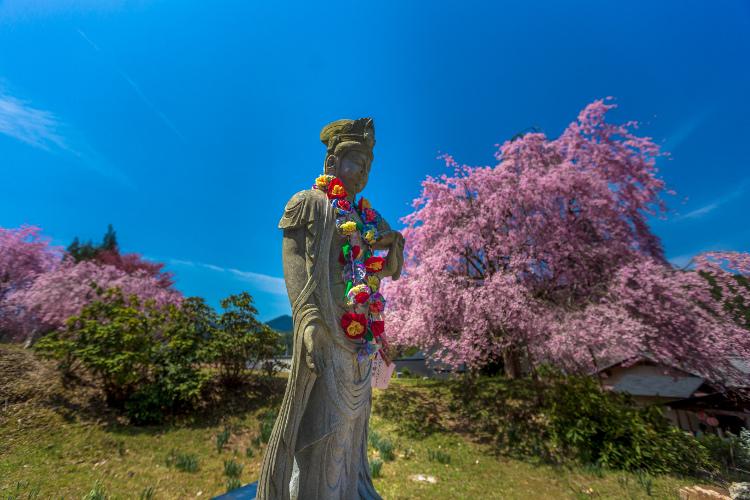 京北の桜を求めて ~後編~_e0051888_14345446.jpg