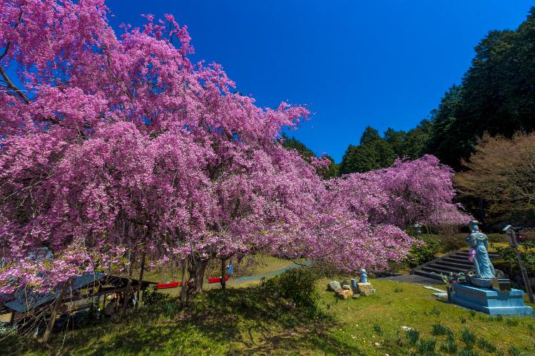 京北の桜を求めて ~後編~_e0051888_14355523.jpg