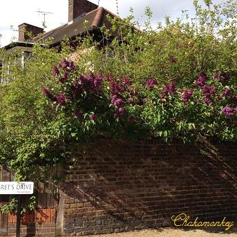 Lovely Lilac_f0238789_0565116.jpg