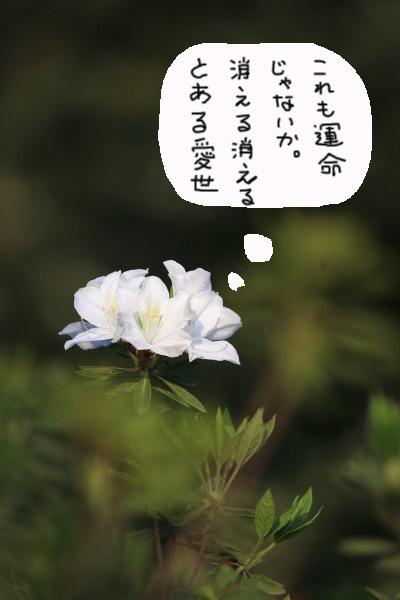 a0183690_20134523.jpg