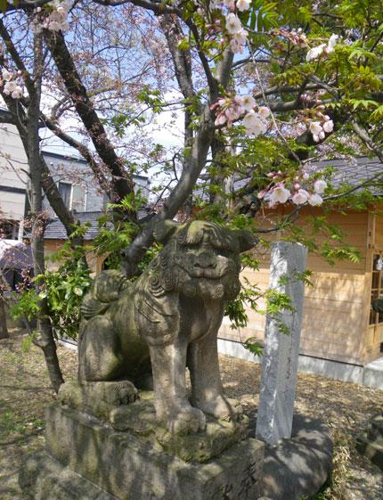 咲き始めたコザクラの仲間 (追記有り)_a0136293_2083919.jpg