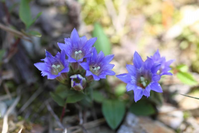 季節の花たち14-4-3_b0223198_21453253.jpg