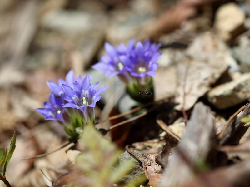 季節の花たち14-4-3_b0223198_2146962.jpg