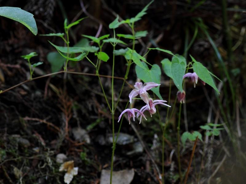 季節の花たち14-4-3_b0223198_21492037.jpg
