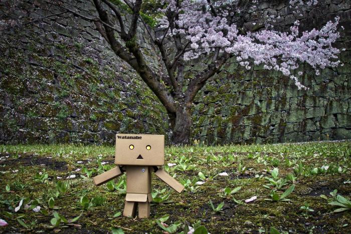 ダンボーの旅 in 熊本城の桜_e0135098_216315.jpg