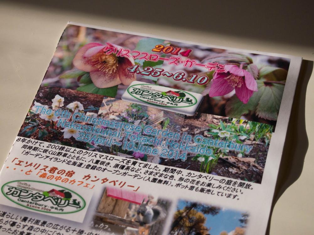 見頃です。今年のカンタベリー・クリスマスローズ・花コレクションVol.1_f0276498_18513390.jpg