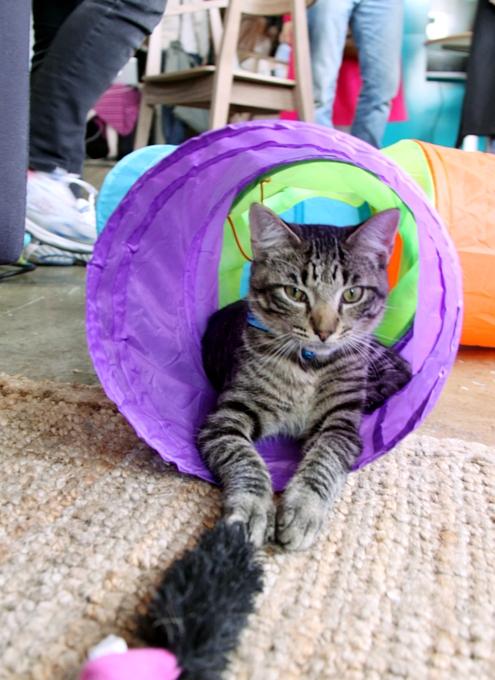 NY初の猫カフェ(Purina One Cat Café)に行ってきました #CatCafe_b0007805_1354663.jpg