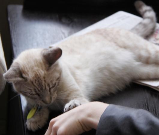 NY初の猫カフェ(Purina One Cat Café)に行ってきました #CatCafe_b0007805_19462346.jpg