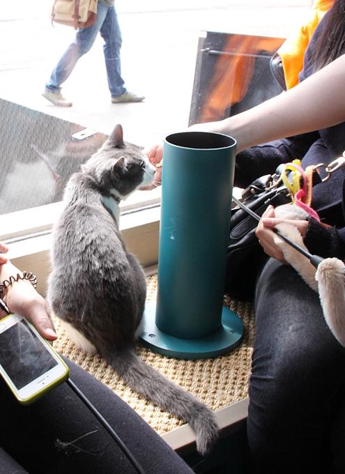 NY初の猫カフェ(Purina One Cat Café)に行ってきました #CatCafe_b0007805_19555176.jpg