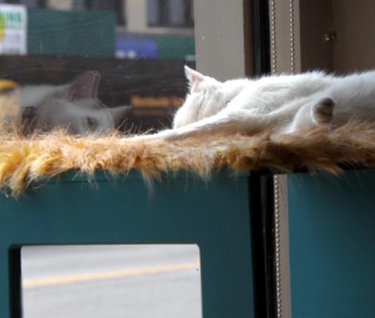 NY初の猫カフェ(Purina One Cat Café)に行ってきました #CatCafe_b0007805_2014189.jpg