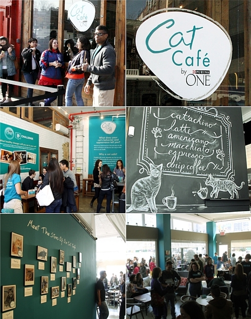NY初の猫カフェ(Purina One Cat Café)に行ってきました #CatCafe_b0007805_20313588.jpg