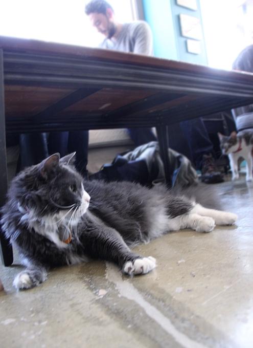 NY初の猫カフェ(Purina One Cat Café)に行ってきました #CatCafe_b0007805_2093298.jpg