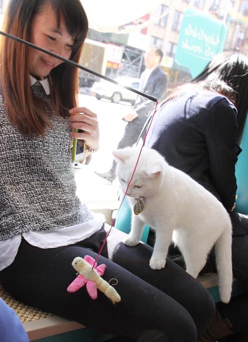 NY初の猫カフェ(Purina One Cat Café)に行ってきました #CatCafe_b0007805_21191796.jpg