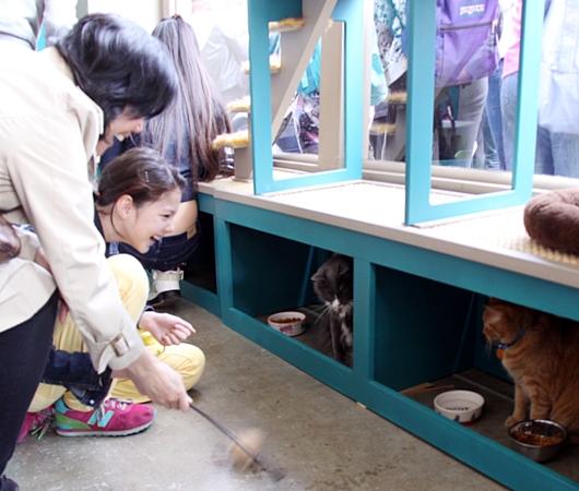 NY初の猫カフェ(Purina One Cat Café)に行ってきました #CatCafe_b0007805_212833.jpg
