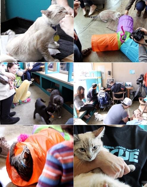 NY初の猫カフェ(Purina One Cat Café)に行ってきました #CatCafe_b0007805_21451395.jpg