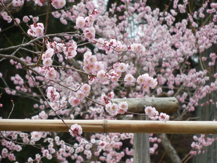日本航空高校唐人町校修学旅行の写真-東北編その2-_d0116009_10542298.jpg