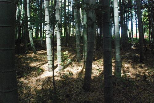 季節と共に生きています。タケノコ堀りに行ってきました_d0174710_21203774.jpg