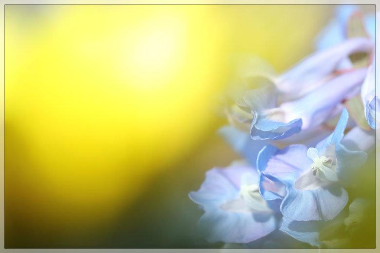 夜明けの珈琲_e0235910_06475180.jpg