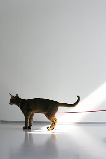 [猫的]200000ショット_e0090124_21483698.jpg