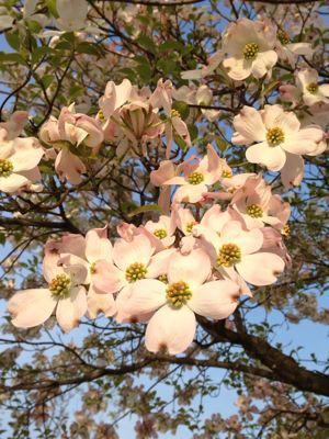 母の日のアレンジ〜市の講習会_f0155431_21493638.jpg